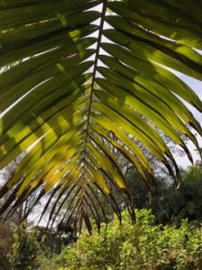 Palm Frond